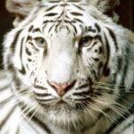 five animals ebook