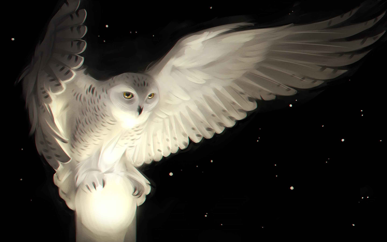 white-owl-2880x1800-artwork-hd-7037